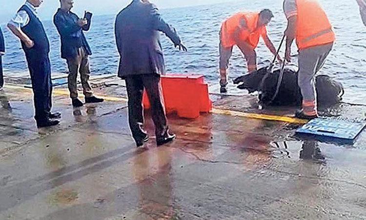 İstanbul'da domuz paniği