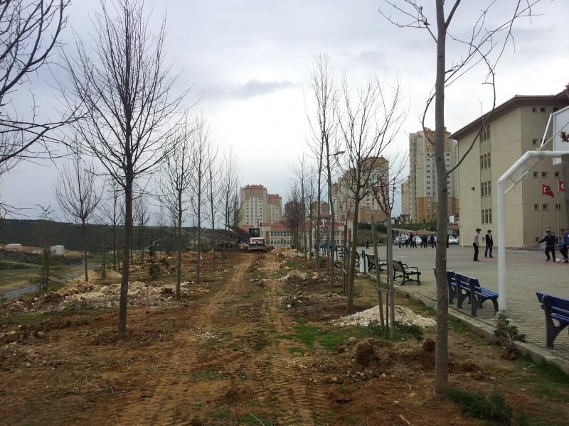 Okul Bahçeleri Ağaçlandırılıyor