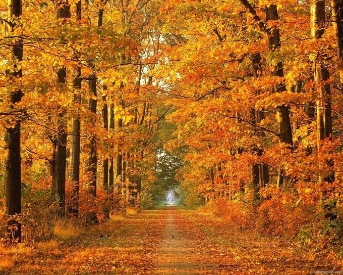 Evinizi sonbahar dekorasyonuna hazırlayın