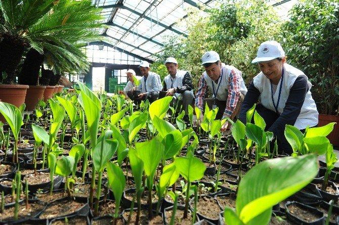 Bahçıvanlık Kursları Başlıyor