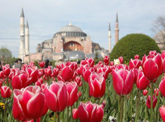 İstanbul Lalelere Büründü