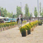 Etnospor Kültür Festivali 2