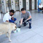Sokak hayvanları emin ellerde