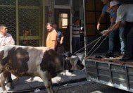 İstanbul'da boğa alarmı!
