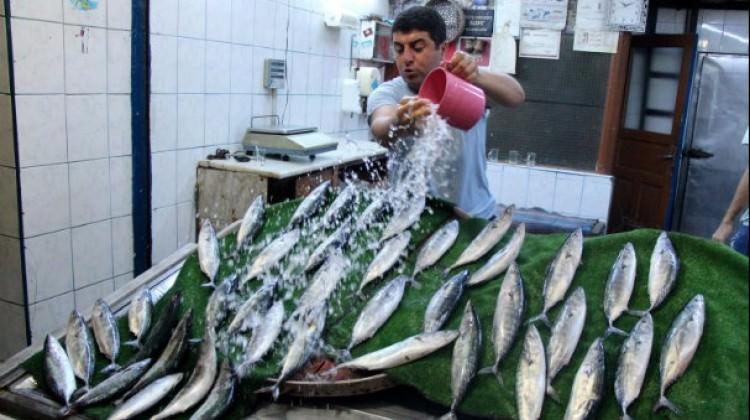 Karadeniz'de 'palamut' bereketi