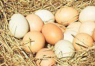 Yumurta üzerindeki kodlar ne anlama geliyor?