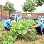 Başakşehirli öğrenciler organik tarımla buluştu